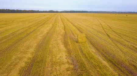 slashing : Aerial views of dry land farming and cropping in Rissia, featuring fields of meadow hay, lucerne, barley and straw in drought affected outback rural regional areas.