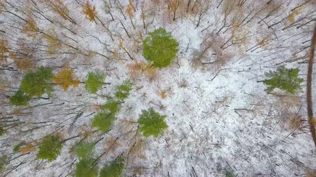 magas szög : AERIAL: Winter forest
