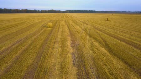 padok : Aerial views of dry land farming and cropping in Rissia, featuring fields of meadow hay, lucerne, barley and straw in drought affected outback rural regional areas.