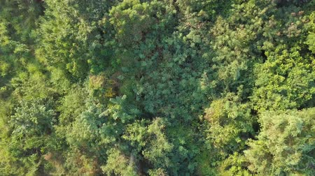 Tropical wild forest. View from the drone