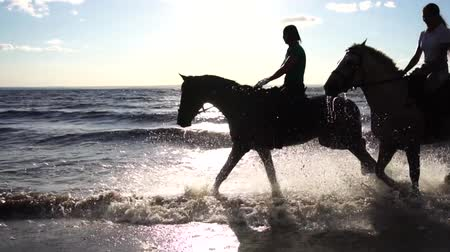 koňmo : Two women ride on horse at river beach in water sunset light