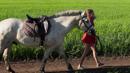 koňmo : Young beautiful woman lead walk with a white horse on the green field