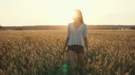 okşayarak : Young woman is strolling alone in meadow in sunset time. She is stepping and touching ears of rye, bright sunlight is behind her Stok Video