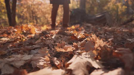 folhas : Male feet are walking over dry leaves lying on ground of autumn forest in daytime, close-up. Man is strolling alone and pushing foliage