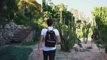 kaktus : Shot from behind of a guy with backpack visiting local botanic park on vacation, exotic cactuses. Empty botanic park. Touristic place. Lovely garden.