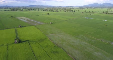 rijst : Aerial Shot Asia Rice Field Stockvideo