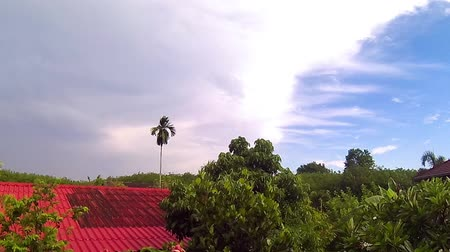 betel : After rain time at rubber plantation with betel palm Timelapse