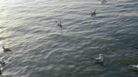 hejno : Seagulls floating on the water surface And some are flying above the sea surface happily