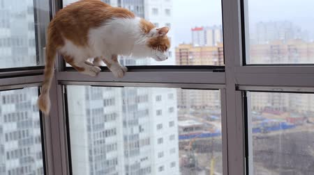 erkély : Cat Jumps on the Open Balcony Window
