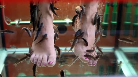 garra : Fish spa