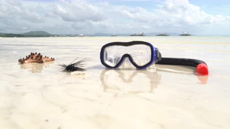 csibész : On the coast lies mask with snorkel, starfish and sea urchin