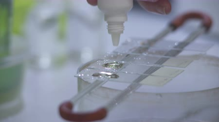 faculty : A medical fluid is applied to microscope slides Stock Footage