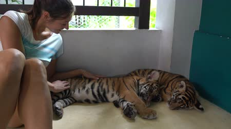 kükreme : Two Tiger Cub doze. Next, a woman sits and strokes them