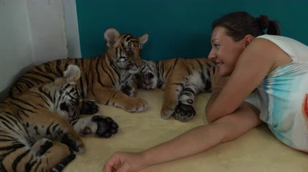 kükreme : Woman with Tiger Cub. Tiger is stretching Stok Video
