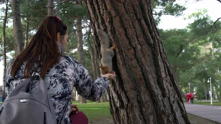 sciurus : A woman feeds a squirrel on a tree in the Park.