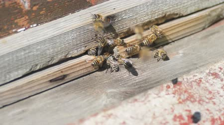 apiary : Bees fly into a hive