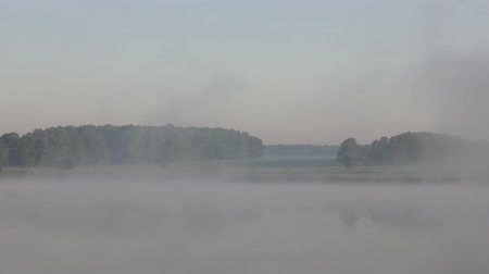 enevoado : Summer morning landscape at the foggy lake