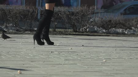 vysoký : Female legs in high boots and pigeons on the sidewalk