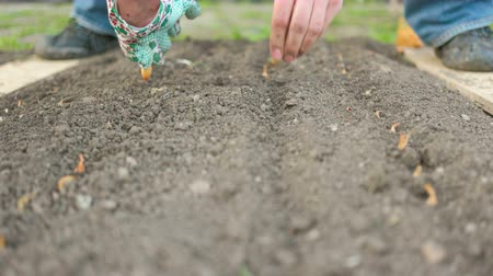 yards : Couple Planting Seeds Stock Footage