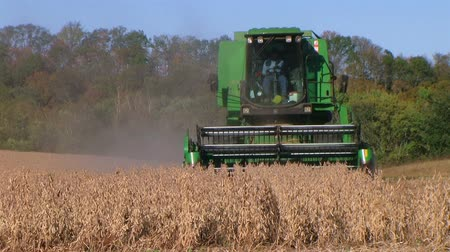 indústria : Farmer combining soybeans on midwest farm during harvest in late fall. Stock Footage