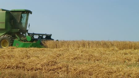 cabeçalho : Combine harvesting ripened wheat crop on midwest farm during harvest.
