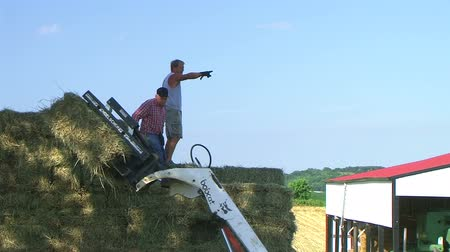empilhamento : Farm hands working together, passing bales and loading hay onto truck. Stock Footage
