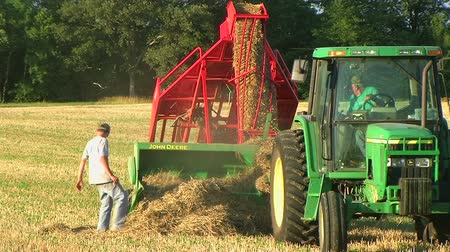 gevşek : Farmer square baling hay and using accumulator, with young farmhand helping. Stok Video