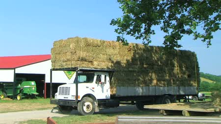 ciężarówka : Farmer hauling huge truck load of square hay bales down road in country.
