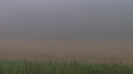 otruby : Time lapse of fog burning off large wheat field on early autumn morning.