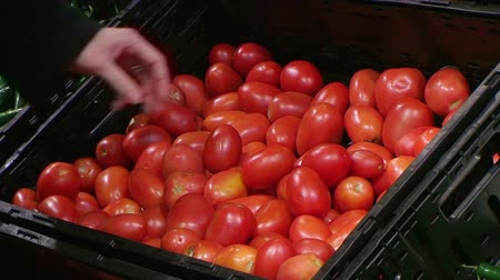 фрукты : Woman selecting fresh tomatoes in grocery store produce department. Стоковые видеозаписи