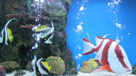 sůl : colorful aquarium, showing different colorful fishes swimming