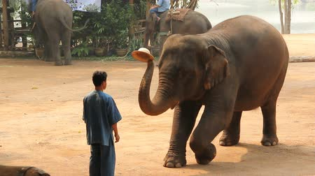 fil : LAMPANG, THAILAND - Every day: Daily elephants show at The Thai Elephant Conservation Center (TECC),  in Lampang, Thailand.