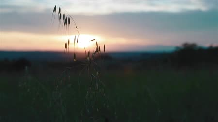 запомнить : Sunset in a meadow, sun and grass Стоковые видеозаписи