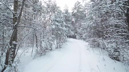 litvánia : A snowy white road in a winter forest