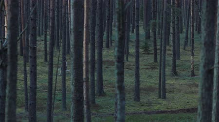 deep forest : Young wild girl running through the dark pine forest. Pan shot Stock Footage