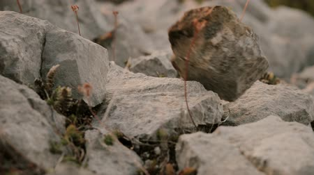 landscaping rocks : The stones fall and roll down close up Stock Footage