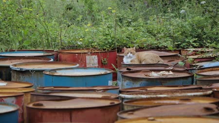 iva : The cat lies on old rusty barrels