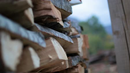 dead wood : Stack of logs chopped trees Stock Footage