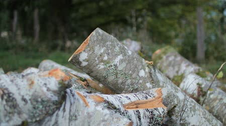 lasca : Stack of logs chopped trees Vídeos