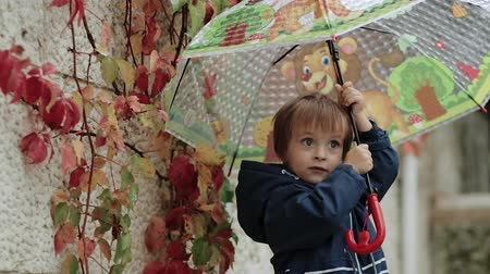 damlar : Happy little boy stands under an umbrella during the rain on a background of autumn yellow leaves