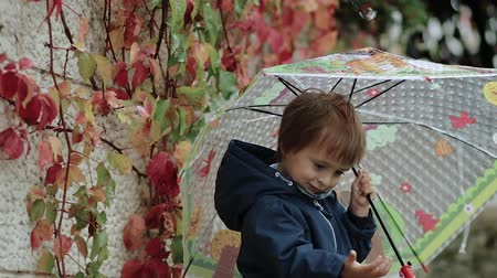 folha : Happy little boy stands under an umbrella during the rain on a background of autumn yellow leaves