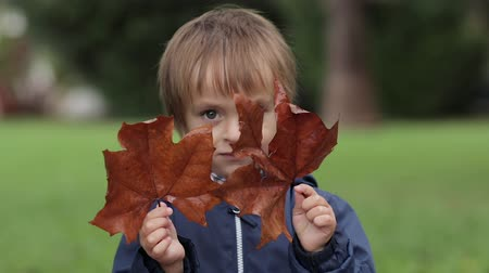 The little boy holds yellow autumn leaves and looks through them at the camera neutral colors for color grading Dostupné videozáznamy