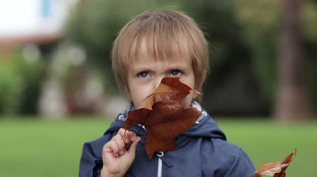 folha : The little boy holds yellow autumn leaves and looks through them at the camera neutral colors for color grading Stock Footage