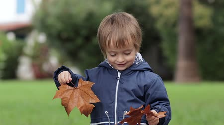 folha : The little boy holds yellow autumn leaves and smile at the camera neutral colors for color grading
