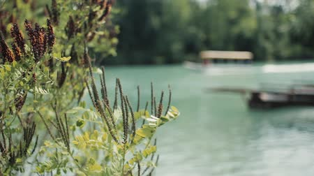 damlar : Plant on the river in Montenegro Sailing boat