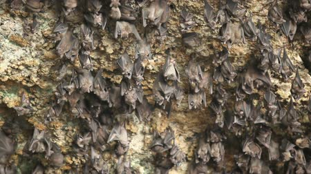 insectivorous birds : Bats house