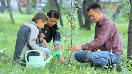 bitki : Family of three planting a new tree in park