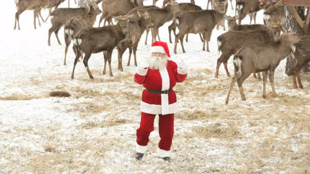 santa : Santa Claus having fun and dancing amongst deer