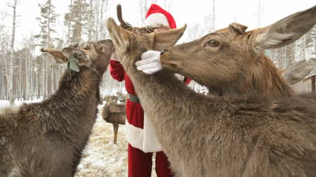 santa : Deer crowding around Santa asking for food