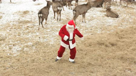 teljesít : Cool Santa Claus dancing on a deer farm